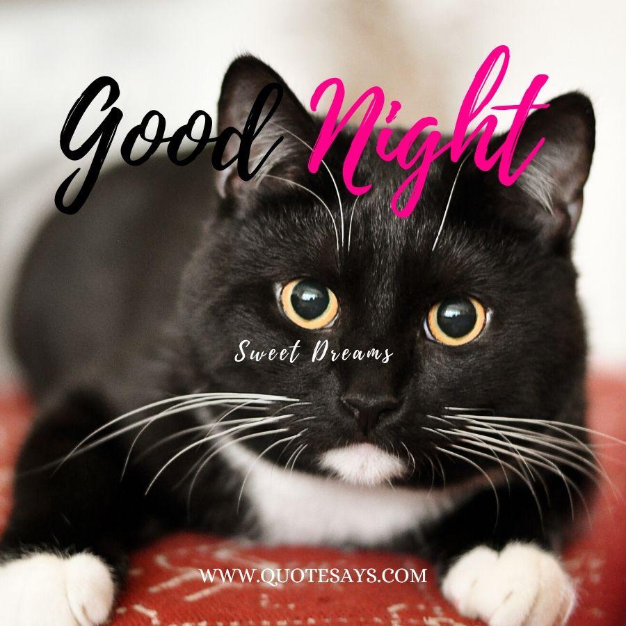Good Night Sleepy Cat