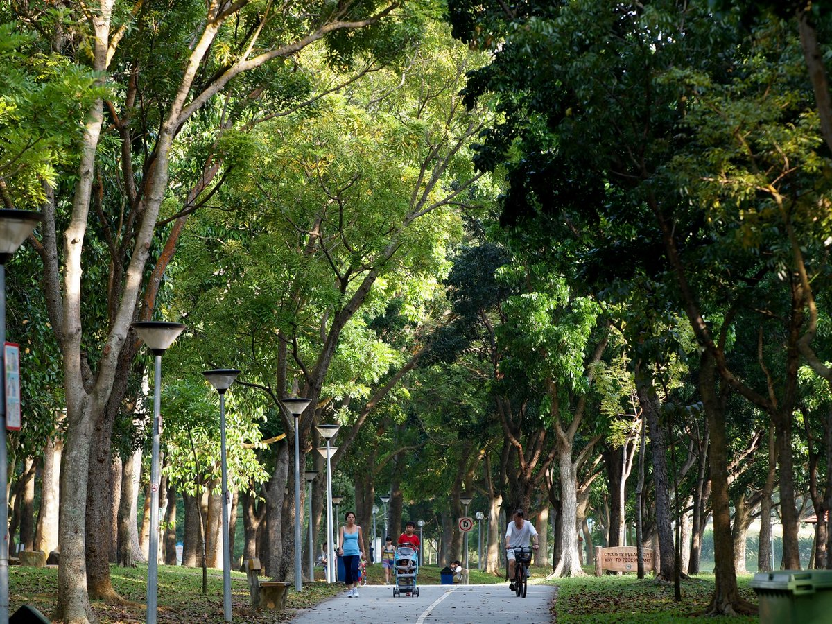 Trees, shared cycling-walking pathway, all in the park and Park Connector Network (PCN)