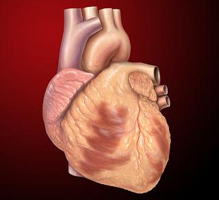 Buah Untuk Menguatkan Jantung