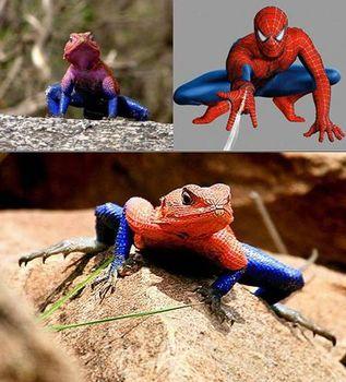 Spiderman or Lizardman