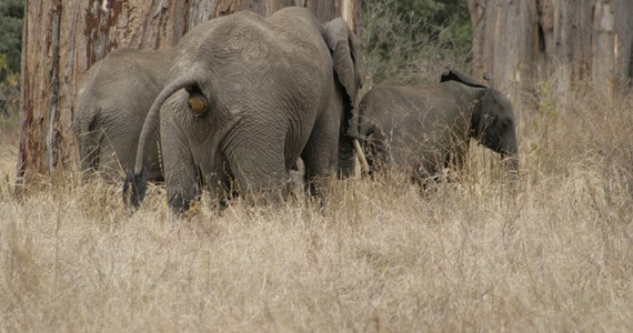 43096f36 Caca de elefante, dildos para tortugas, gatos líquidos... las  investigaciones más locas del año | La Oropéndola Sostenible