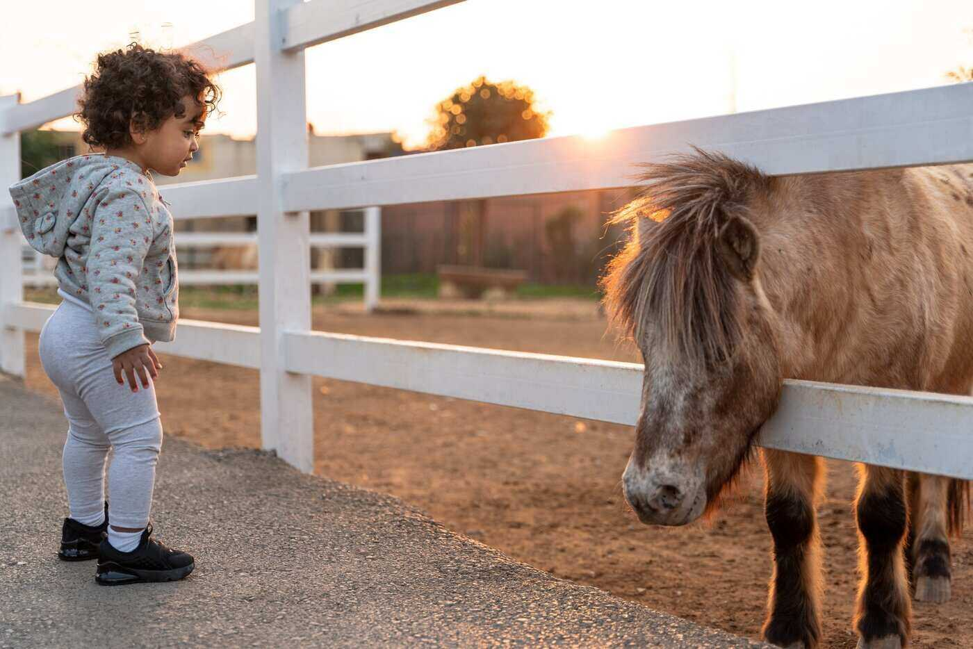 child and pony - horses for sale - 7 tips for first-time buyers