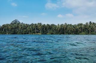 Vue sur les palmiers depuis la mer