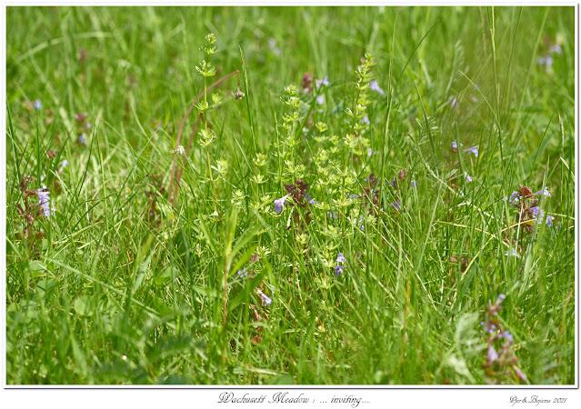 Wachusett Meadow: ... inviting...