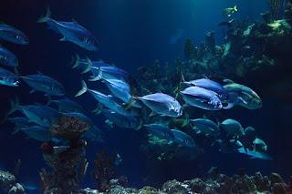 Pengertian Biota Laut, Jenis, dan Manfaatnya