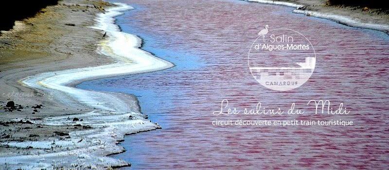 Le salin d Aigues-Mortes - Celoushka c5d9bcf663d