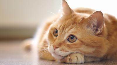 Gatos-vega-conhecimentos