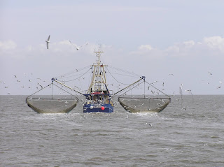 Tata Kelola Perikanan Berkelanjutan Butuh Sinergitas