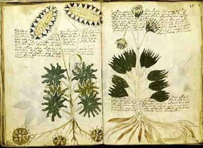 Rahasia Misteri Isi Naskah Voynich Artefak Kuno Dari Abad 15