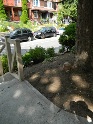 Koreatown Toronto Summer Front Yard Cleanup After by Paul Jung Gardening Services--a Toronto Organic Gardener
