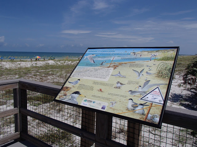 seabird sign