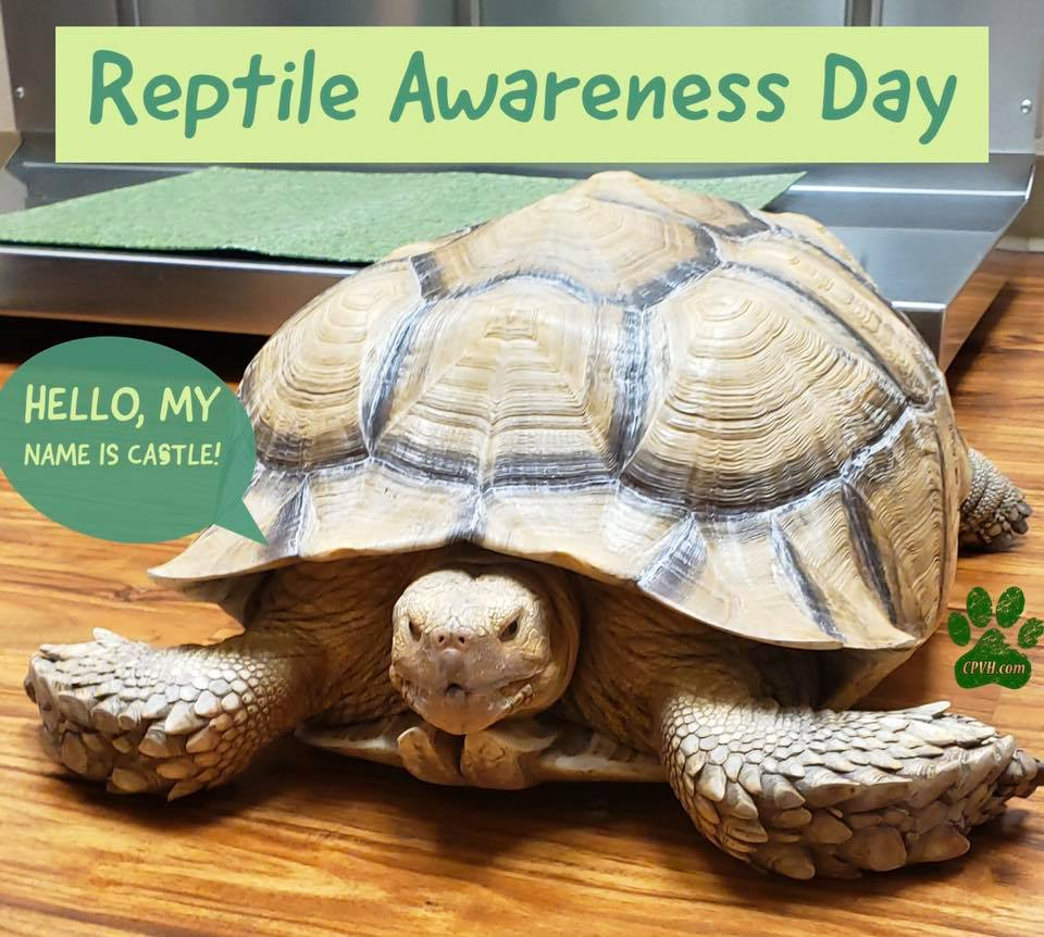 National Reptile Awareness Day Wishes For Facebook