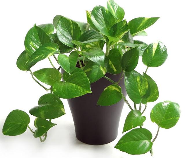 Faktor Lingkungan yang mempengaruhi pertumbuhan tanaman