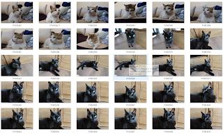 Monday cats photo session