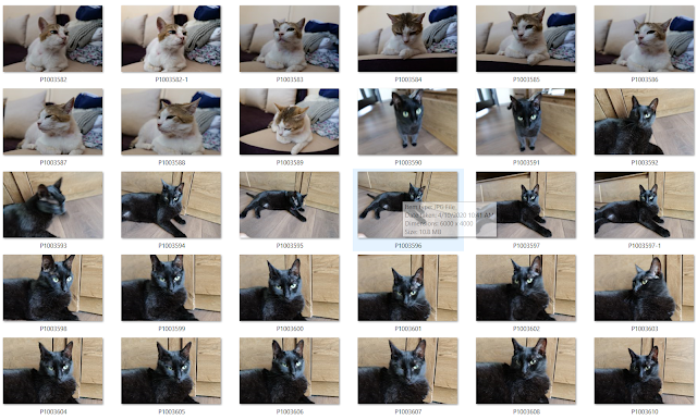 Lumix S5 and the cats