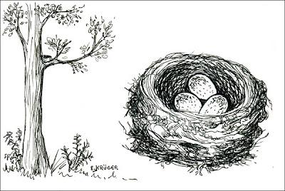 nido de Zorzal colorado Turdus rufiventris