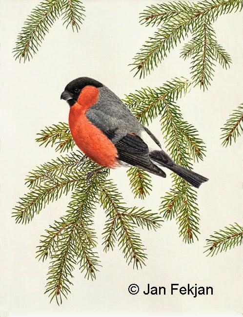 Bilde av digigrafiet 'Dompap'. Digitalt trykk laget på bakgrunn av et maleri av en fugl. Illustrasjon av dompap, Pyrrhula pyrrhula, som sitter på en grankvist. Fuglen og kvisten er avbildet mot en en nøytral lys bakgrunn. Bildet er i høydeformat.