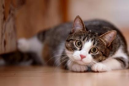 Jenis Makanan Kesukaan Kucing Yang Mudah Didapat