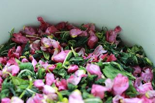 заготовки на зиму, иван-чай, сушение чая, настроение своими руками, кабачки консервирование, кипрей чай, сушим чай, огурцы с кетчупом чили, вкусные заготовки, цветы иван чая,