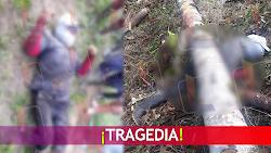 ¡Tragedia! Campesino murió aplastado por un árbol en Palestina