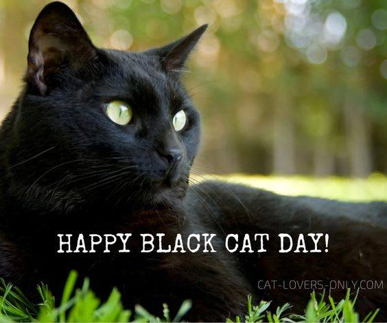 National Black Cat Day Wishes for Instagram