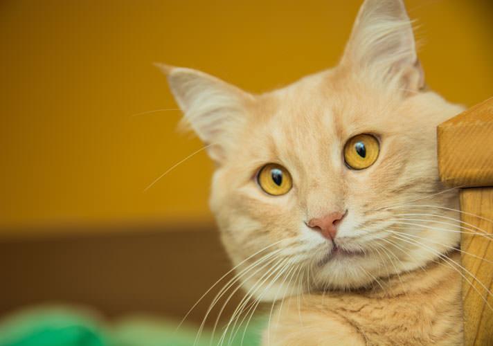 Ternyata Suara Kucing Juga Punya Arti Lho!