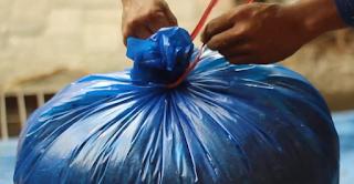 Plastik Silase Tebon Jagung diikat rapat