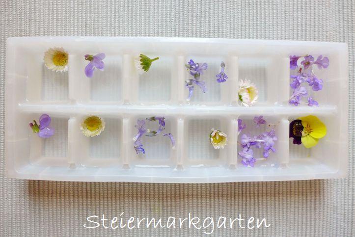 Blüteneiswürfel-selber-machen-Steiermarkgarten