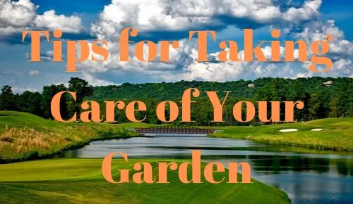 Tips for Taking Care of Your Garden