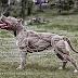 Ποια είναι η χρησιμότητα του μυικού συστήματος στον σκύλο;...