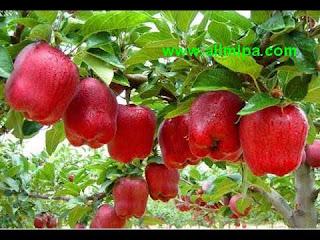 kumpulan apel contoh dalam materi perbandingan