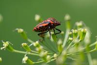http://fineartfotografie.blogspot.de/2014/06/makrofotografie-bluten-und-insekten.html