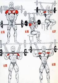 Know Your Muscle Building Exercises - The Shoulders