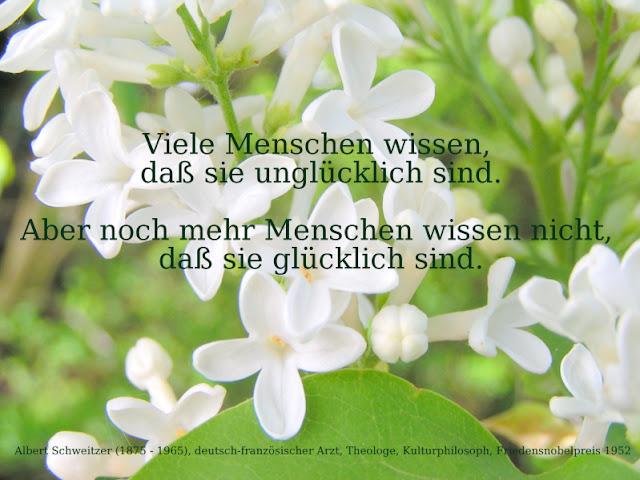 Zitat - Quote: Albert Schweitzer