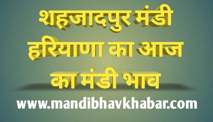 Aaj ka mandi bhav | Shahzadpur mandi bhav today | Shahzadpur mandi bhav | हरियाणा मंडी भाव टुडे | शहजादपुर मंडी भाव टुडे