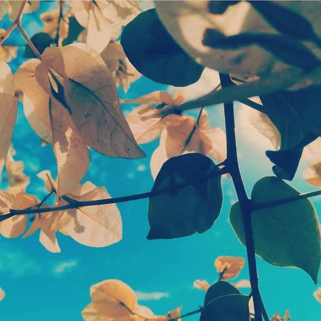 شركة تنسيق حدائق بالمجمعة تركيب العشب الصناعي بالمجمعة وتنسيق حوش المنزل المجمعة