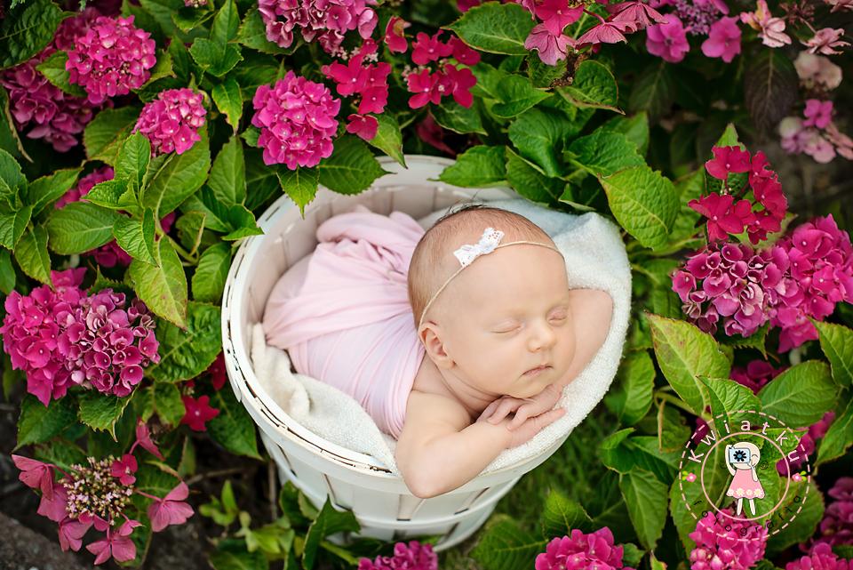 dziewczynka w białym koszyku, różowe hortensje