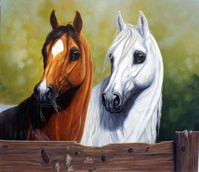 صور خيول عربية 2021