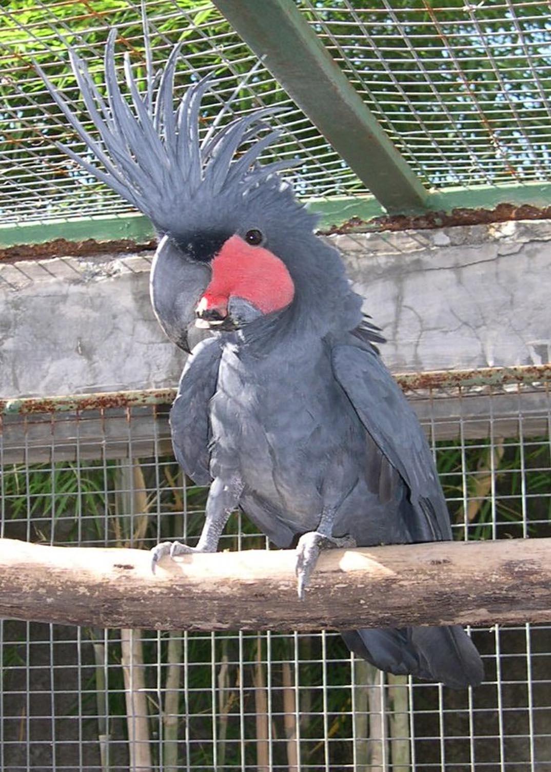 Daftar Harga Burung Kakatua Daftar Harga Burung Kicau