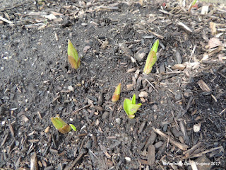 pic of small budless flowers sprouting during April in Ohio