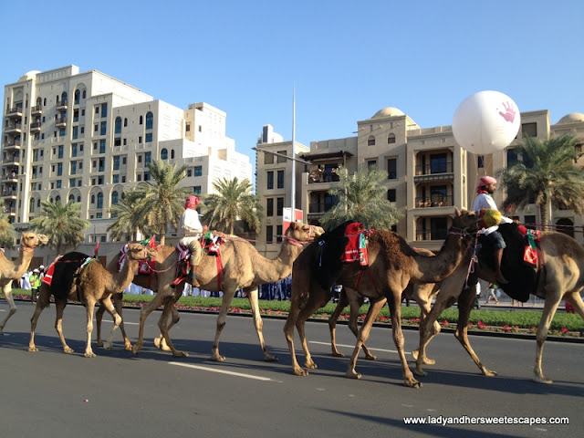 Camels UAE NAtional DAy