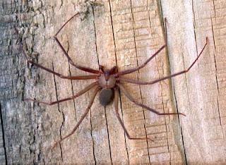 Spider-bites
