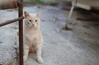 Mengenali tanda kucing akan lahiran