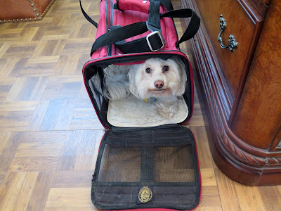 Traveling by air with pets, carrier size requirements vary widely depending on airline