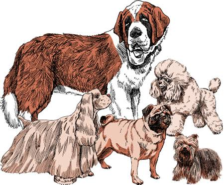 GENERAL HISTORY OF DOGS