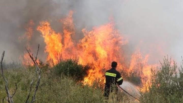 Πυρκαγιά έκαψε δασική έκταση στα Φάρσαλα