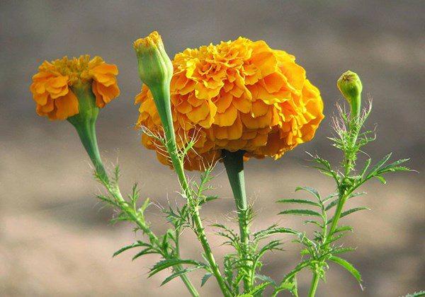 Lưu ý cúng rằm tháng 7 âm lịch: Nên cắm loại hoa nào trên bàn thờ