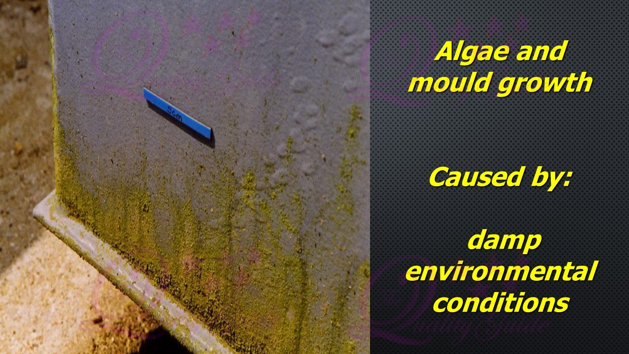 growth of mould on a paint film