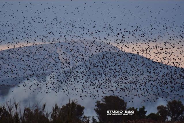 Αργολίδα: Χιλιάδες ψαρόνια κάλυψαν τον ουρανό