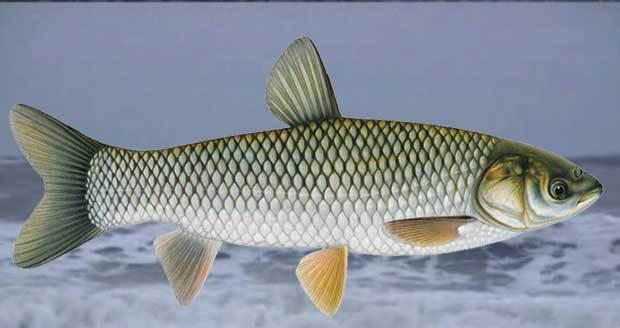 fishries in rajasthan